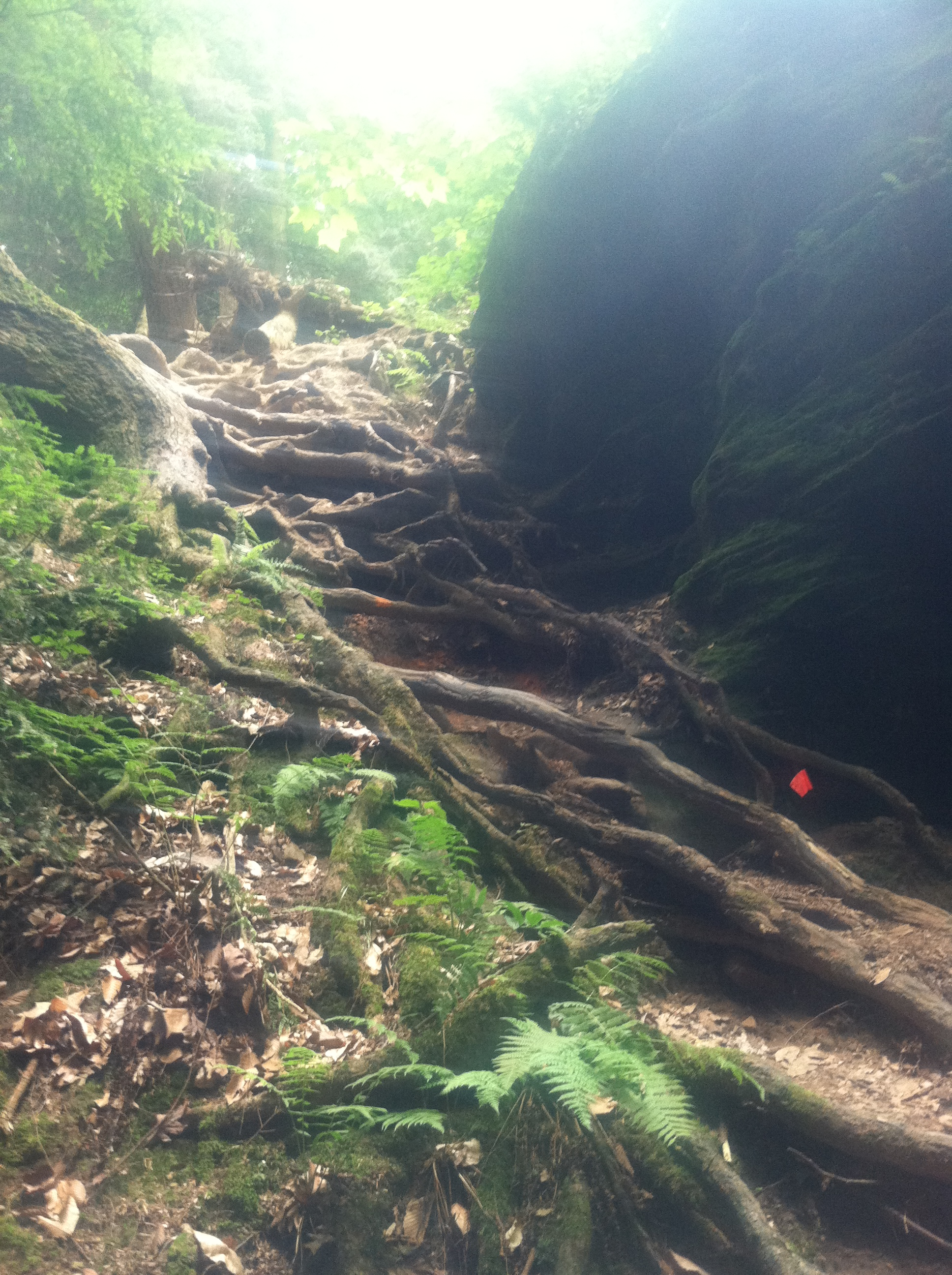 root wall to climb at the Mohican 100 Marathon in Ohio